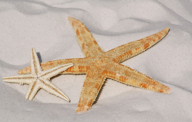 Noticia: Los días de cierre en vacaciones
